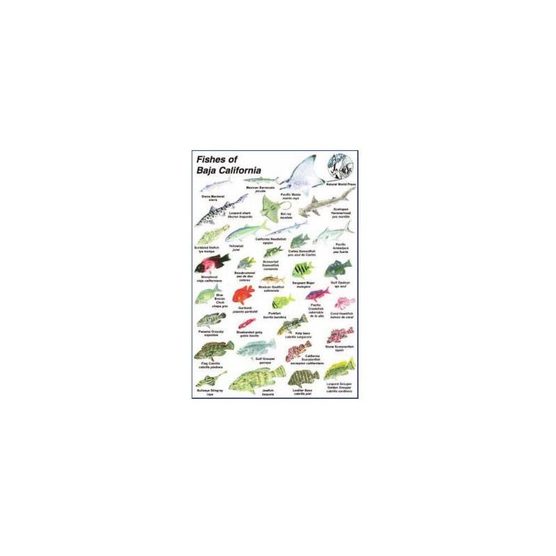 Natural World Press Fishes Of Baja California Identification Fish ID